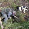 Hunting for Truffles with Dogs