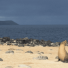 Win a Trip to the Galapagos (with airfare!) from LAN Airlines!