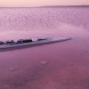On the Shores of a Pink Lake in Australia