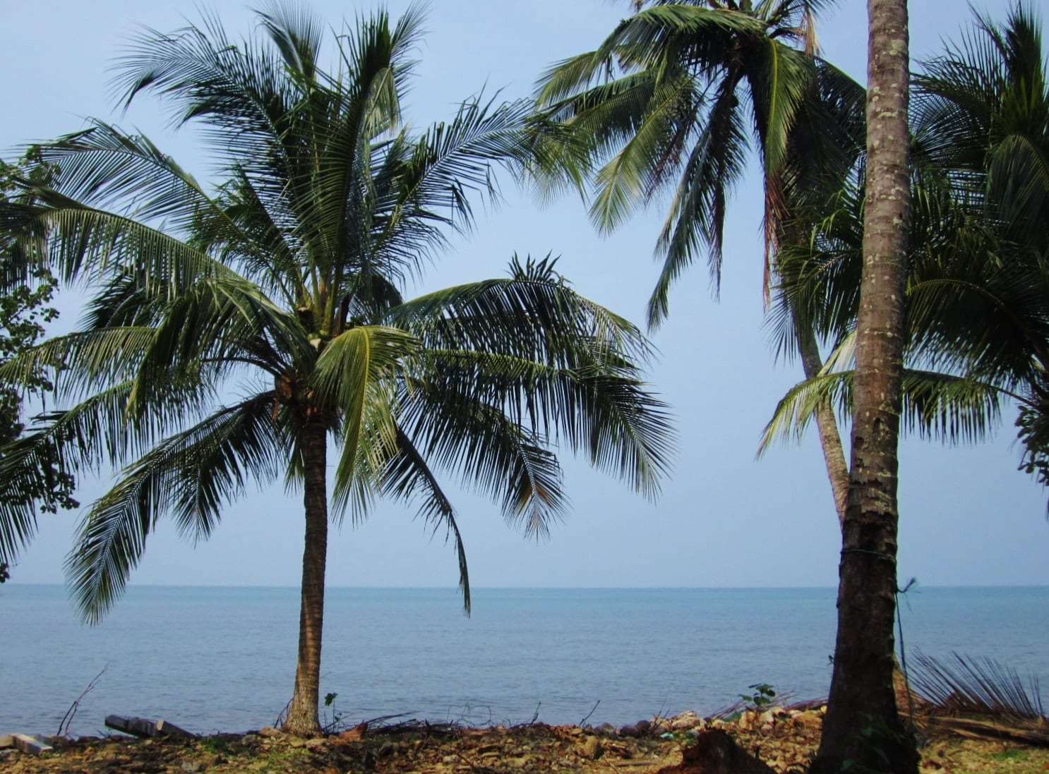 Koh Chang Palm Trees