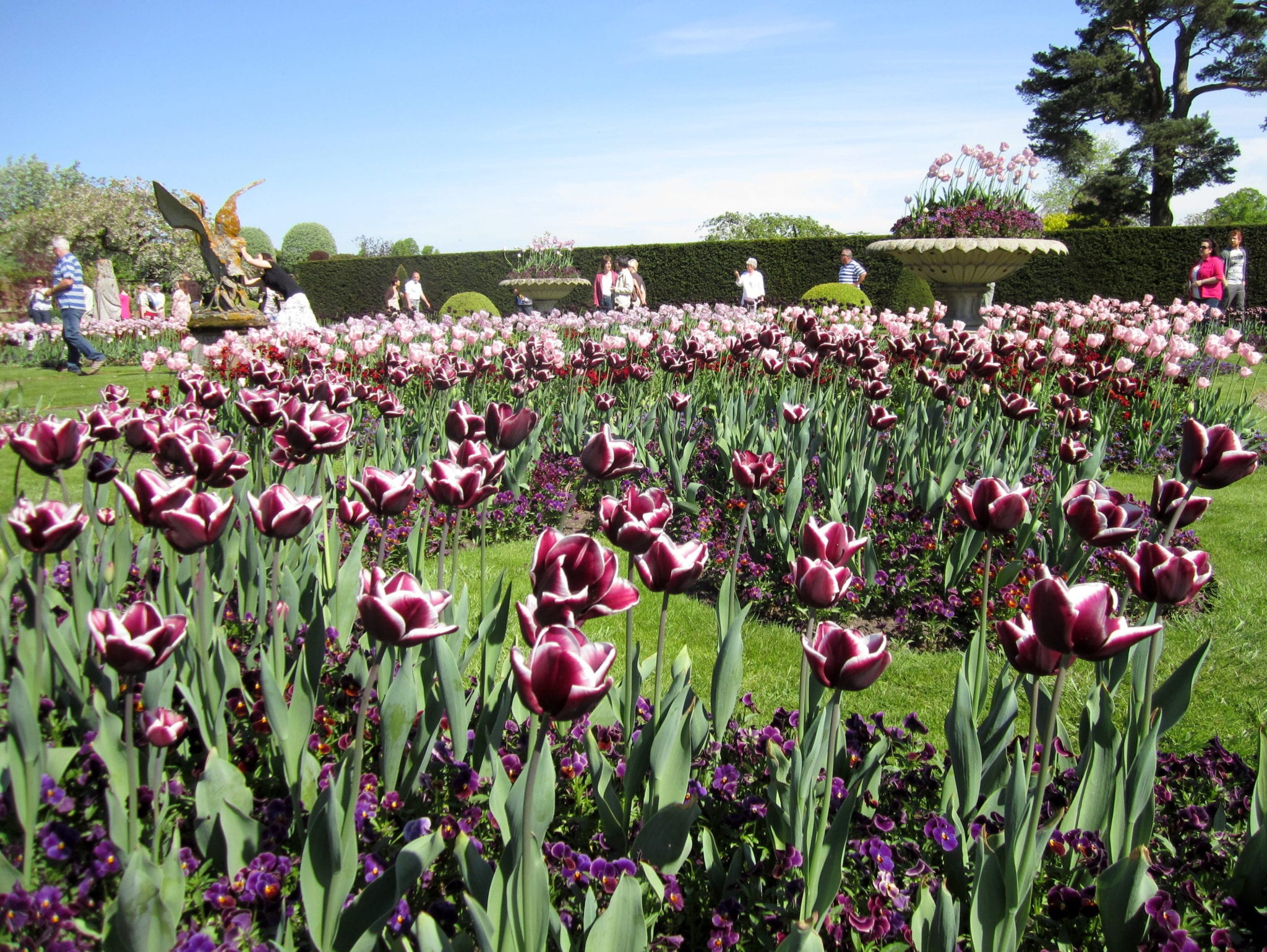 Dark Romance Tulips
