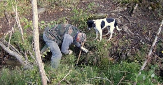 truffle-hunting-gallery