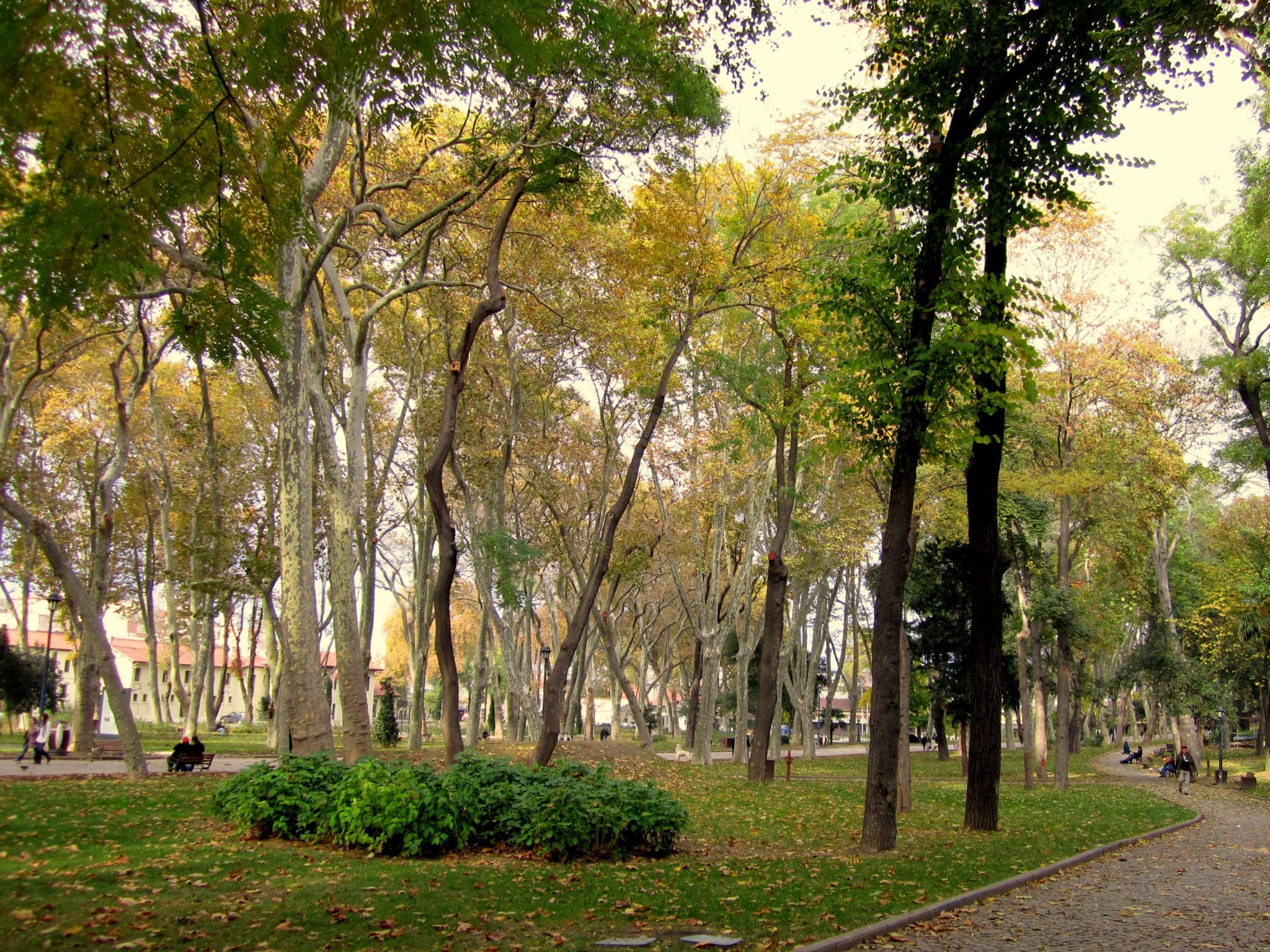 Istanbul Trees