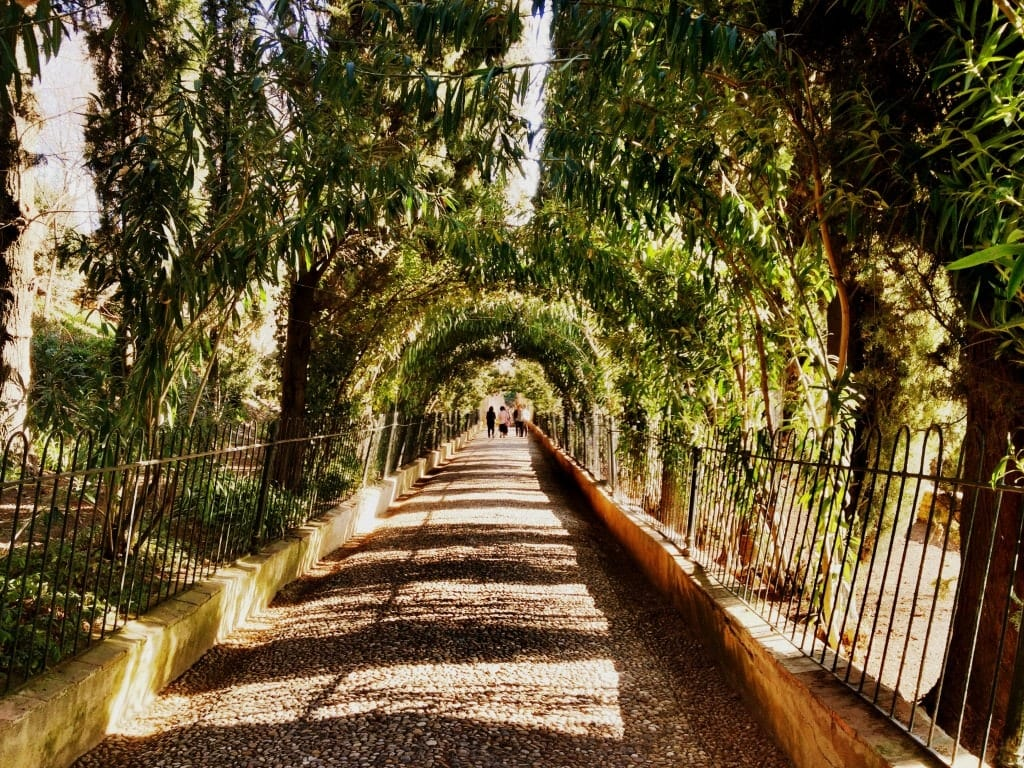 a treeless world essay