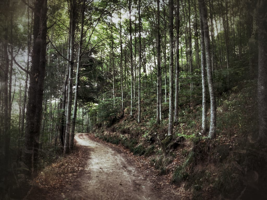 Montseny Forest