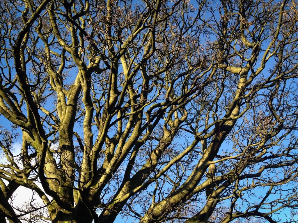 Scottish Branches