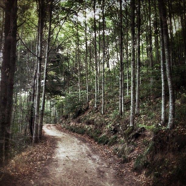 Montseny Forest via Instagram