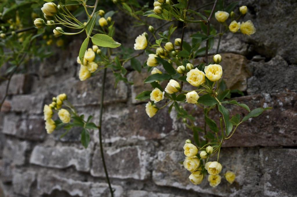 Flowers in Bagno Vignoli