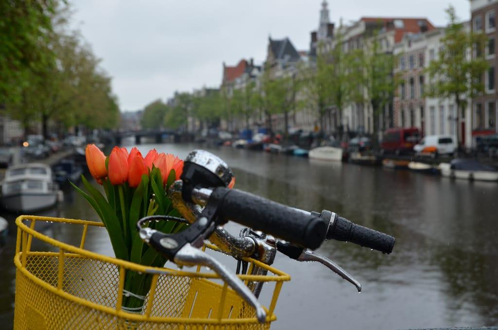 Quintessential Amsterdam