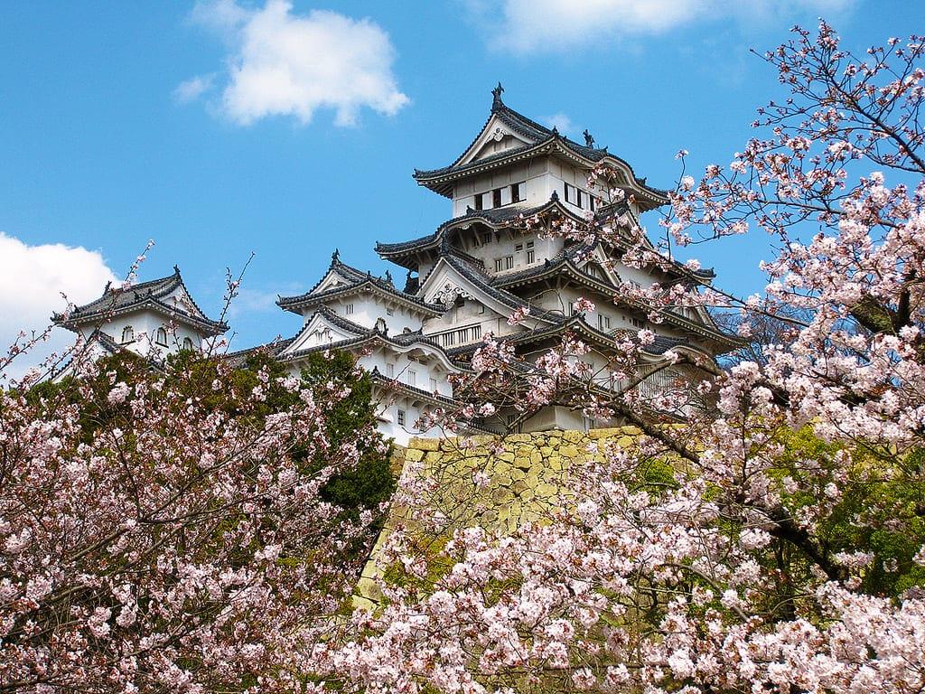姫路城の桜 (Cherry Blossoms at Himeji Castle)