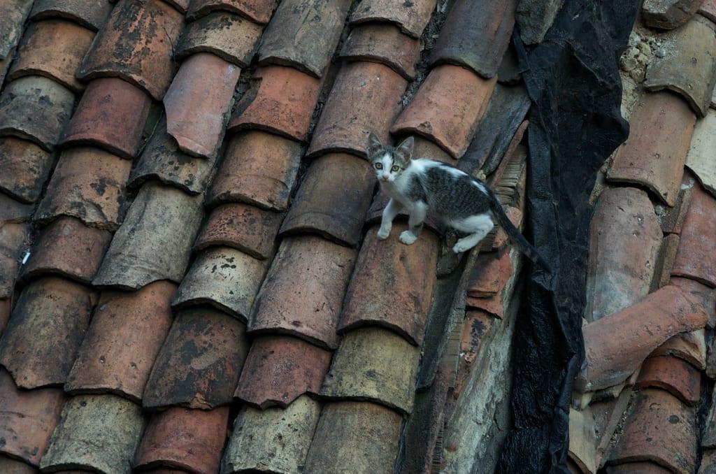 Veliko Tarnovo Cat