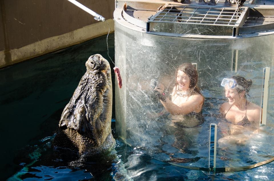 Kate Croc Cage Diving