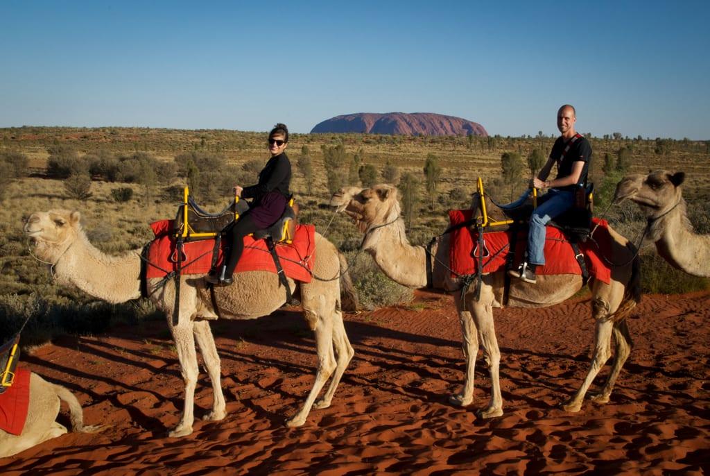 Camels in Uluru