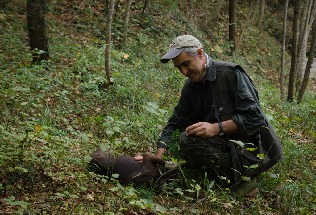Truffle Hunting in Romagna