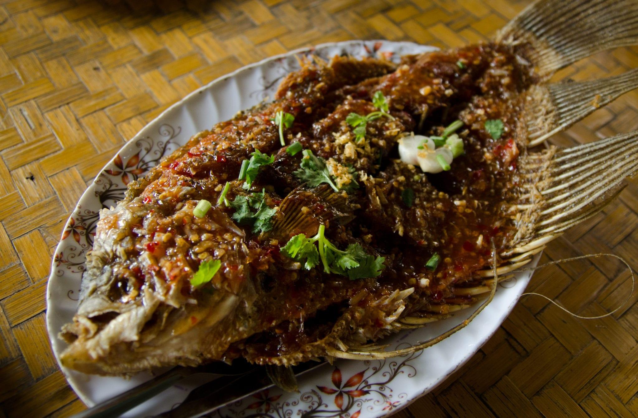 Khao Sok Fish