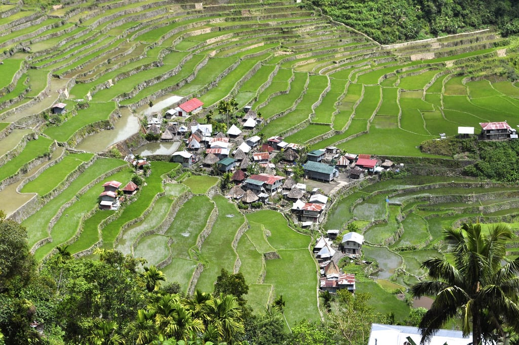 Close up of Batad terraces