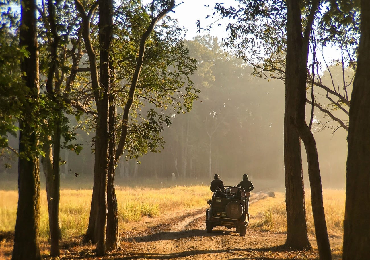 A tiger safari in Madya Pradesh, India, with a safari vehicle driving through trees on golden grass.