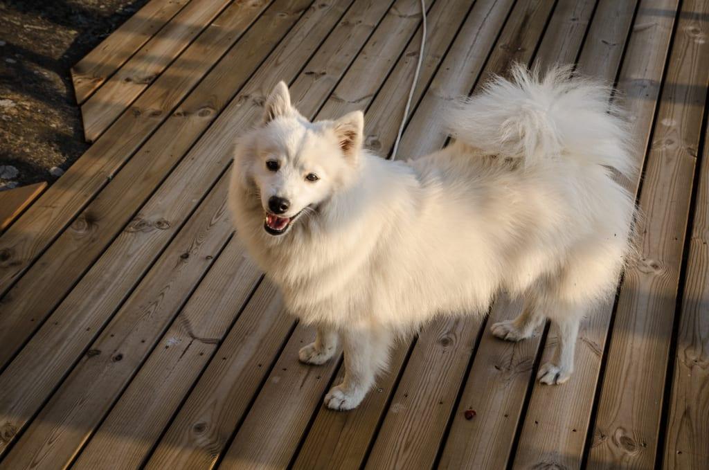 Nekku the dog