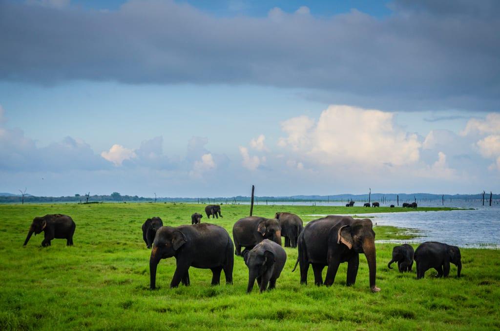 Elephants in Kaudalla National Park