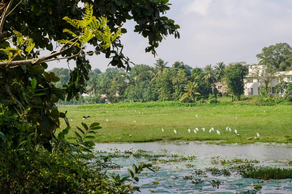 Thalangame