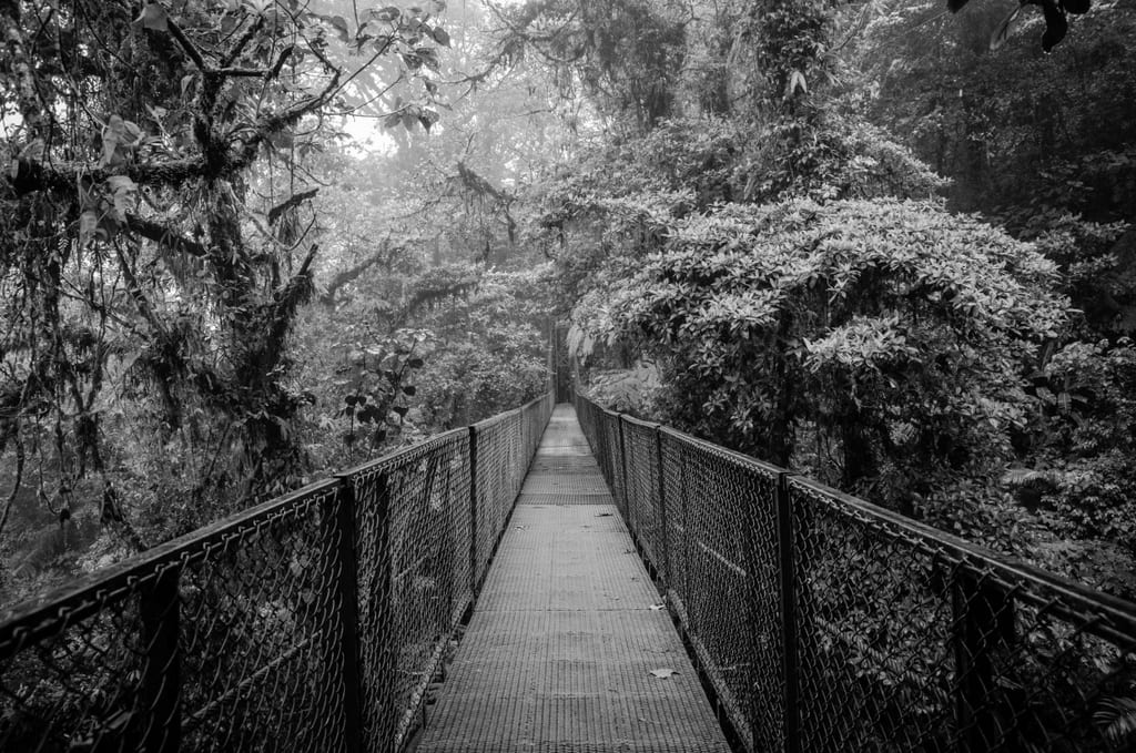 A black and white shot of a bridge surrounded by lush greenery on a damp, rainy day in Costa Rica.
