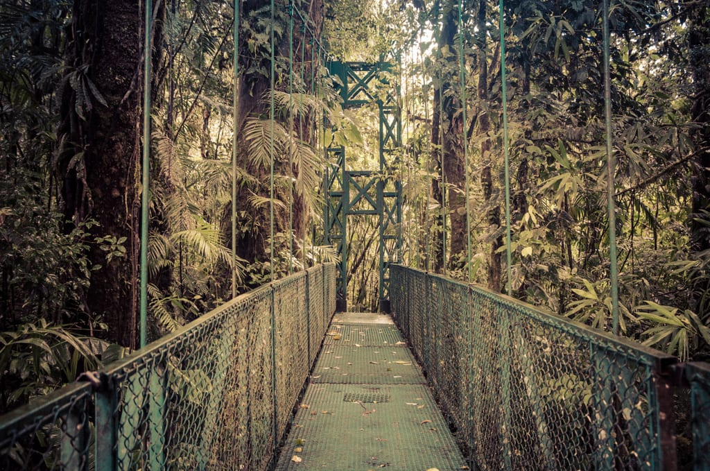A hanging bridge through the cloud forest in Monteverde, Costa Rica.