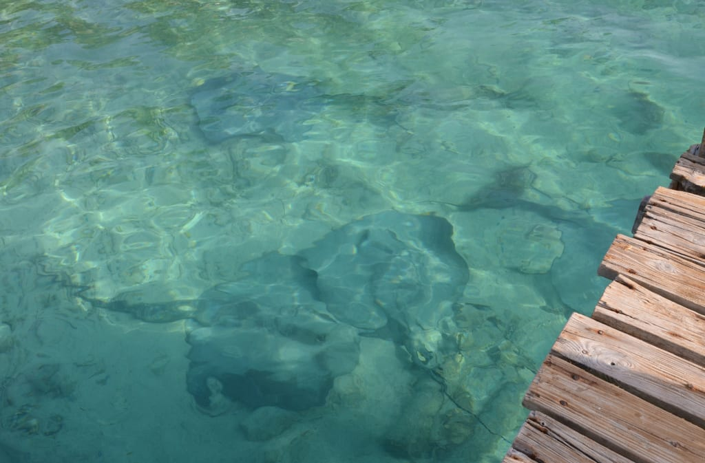 Sting Rays on Tobacco Caye