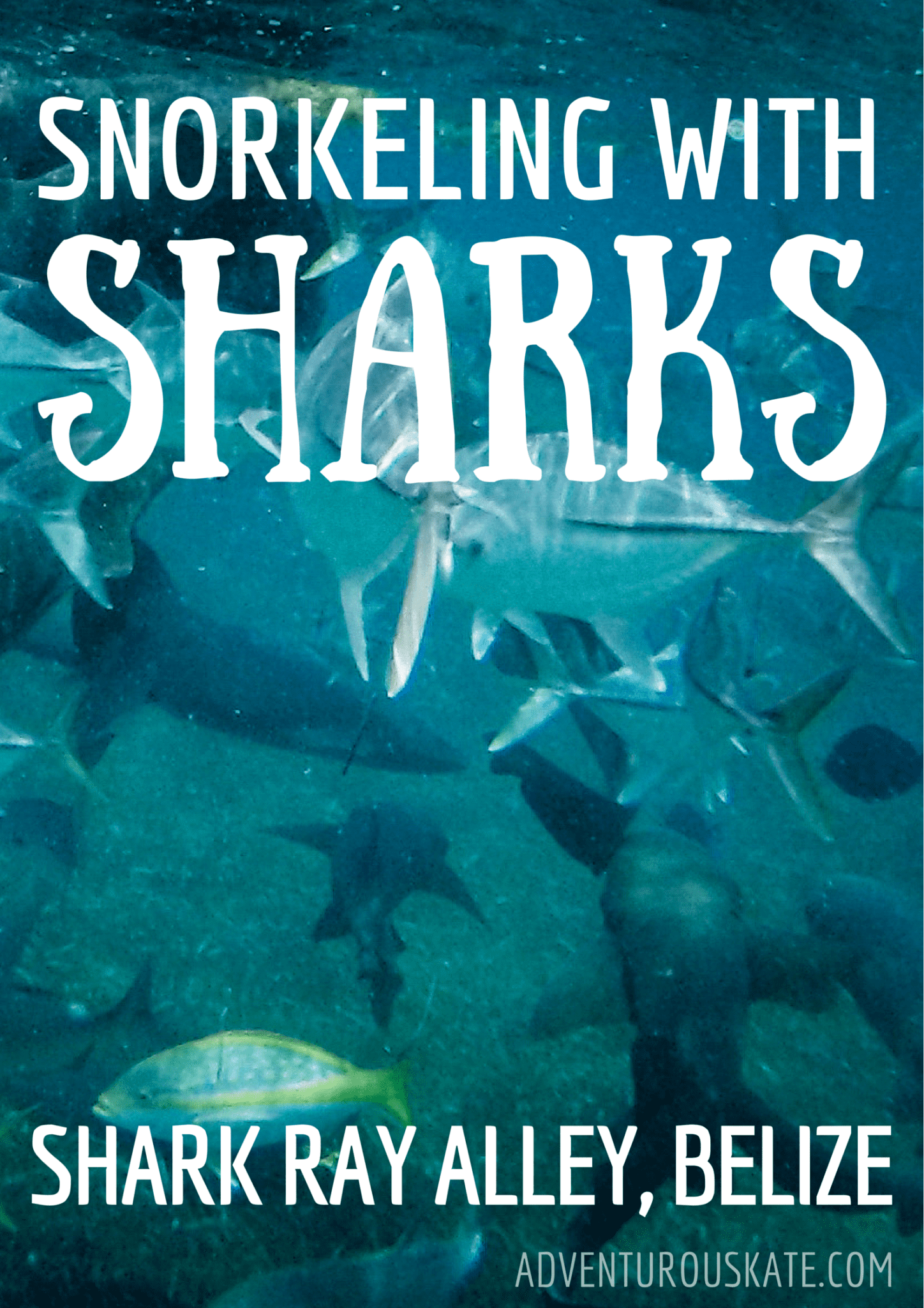 Snorkeling With Sharks In Belize Via Adventurous Kate