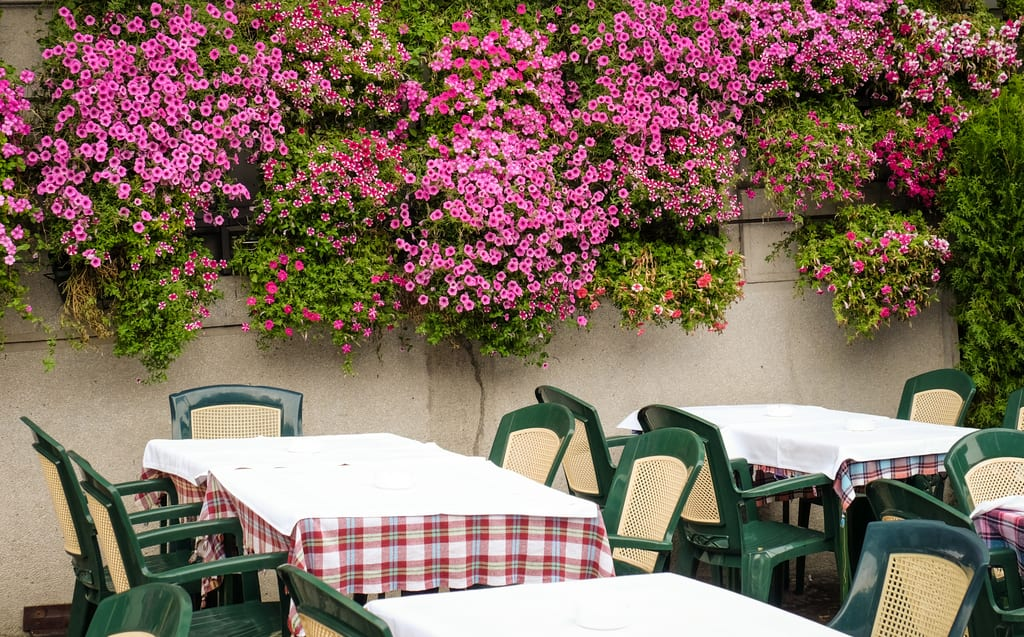 Belgrade Tables and Flowers