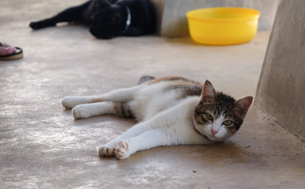 Cat Lanta Animal Welfare