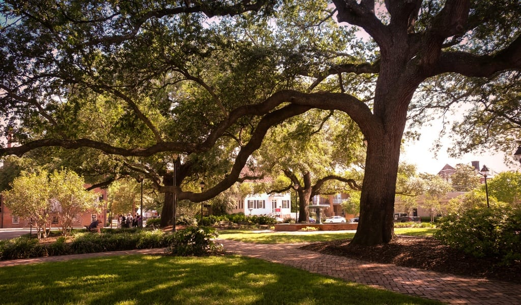 Savannah Trees