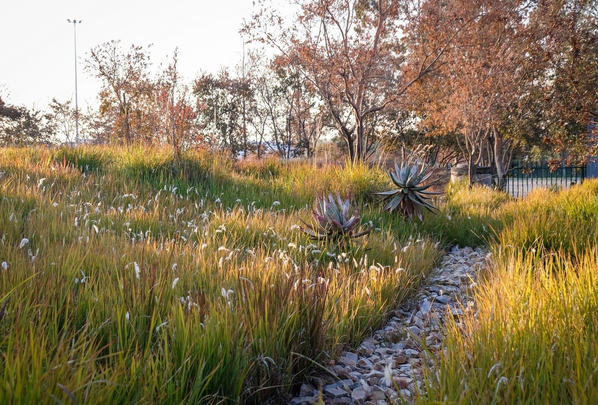 Garden at Apartheid Museum