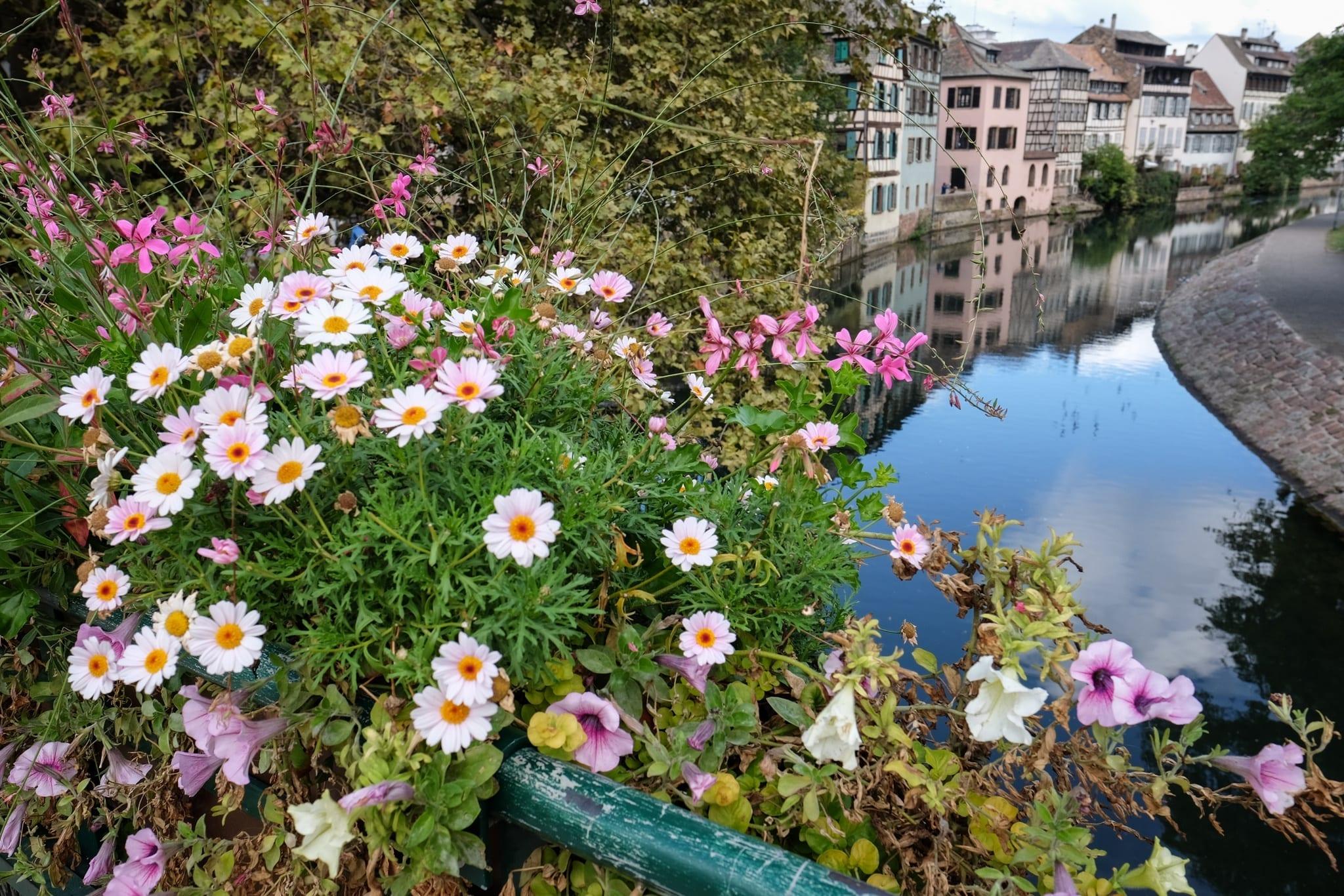 Flowers in Strasbourg
