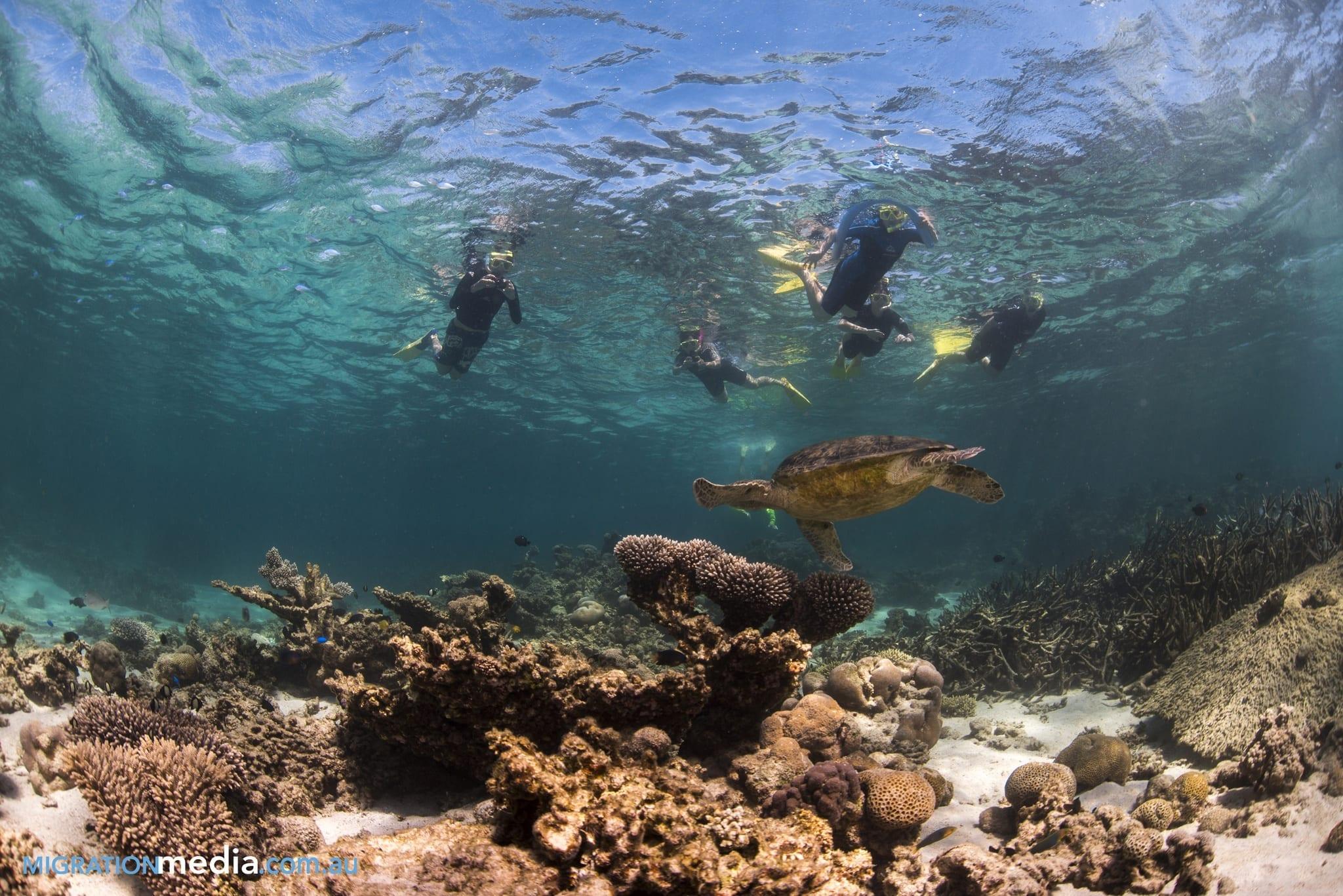 Turtle at Ningaloo Reef