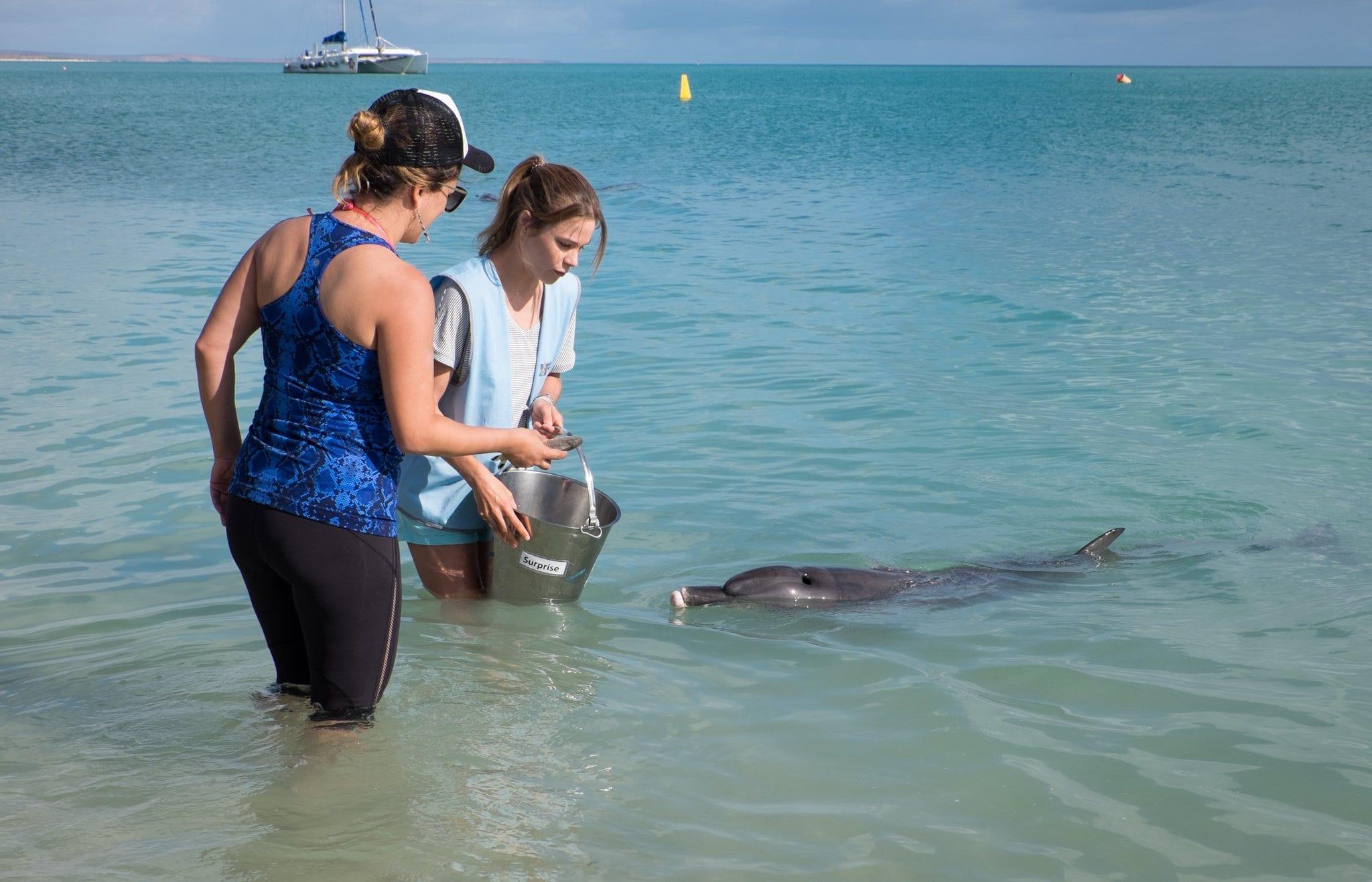 Kate Feeding Dolphins Monkey Mia