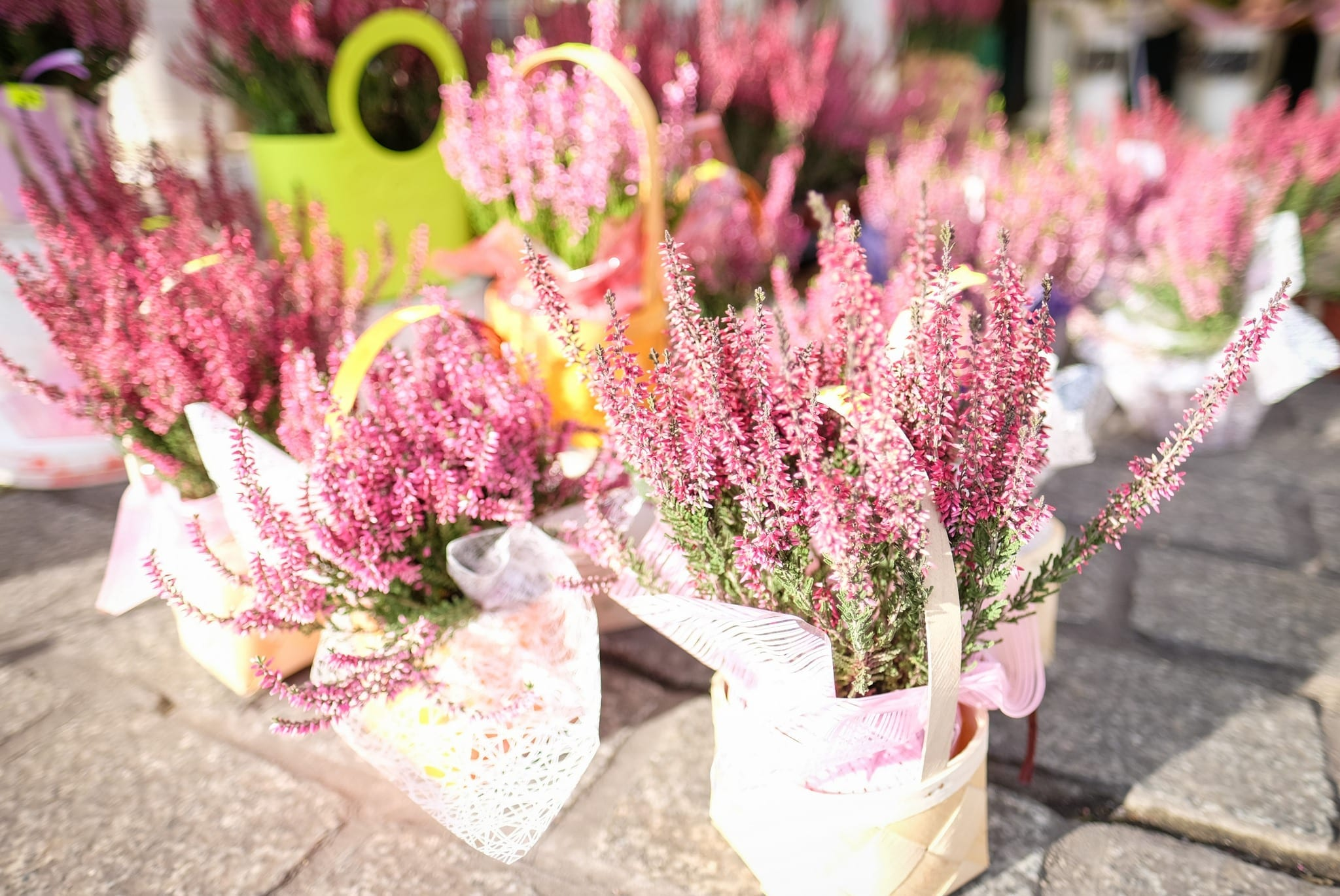 Artificial Decorations Audacious Artificial Greenery Leaf Shape Evergreen Plant Artificial Flowers Plastic Fake Garden Plant Wholesale To Be Highly Praised And Appreciated By The Consuming Public