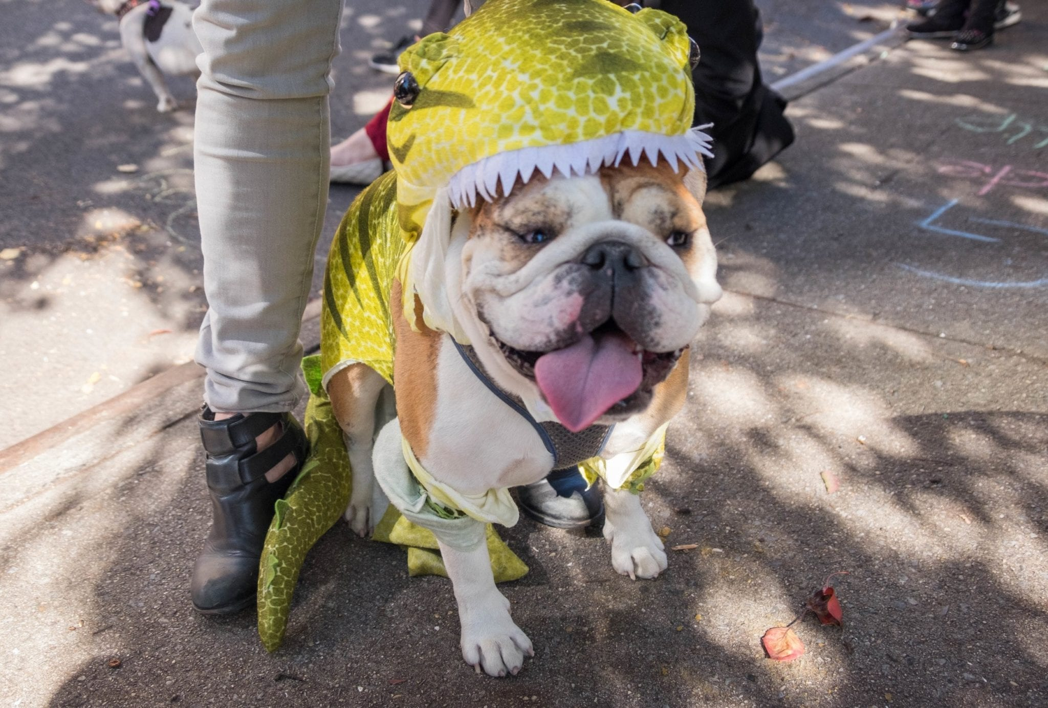 32fc39743e2 Isn t that an awesome bulldog name  AND LOOK HOW HAPPY SHE IS. Even as  she s being eaten by a dinosaur.
