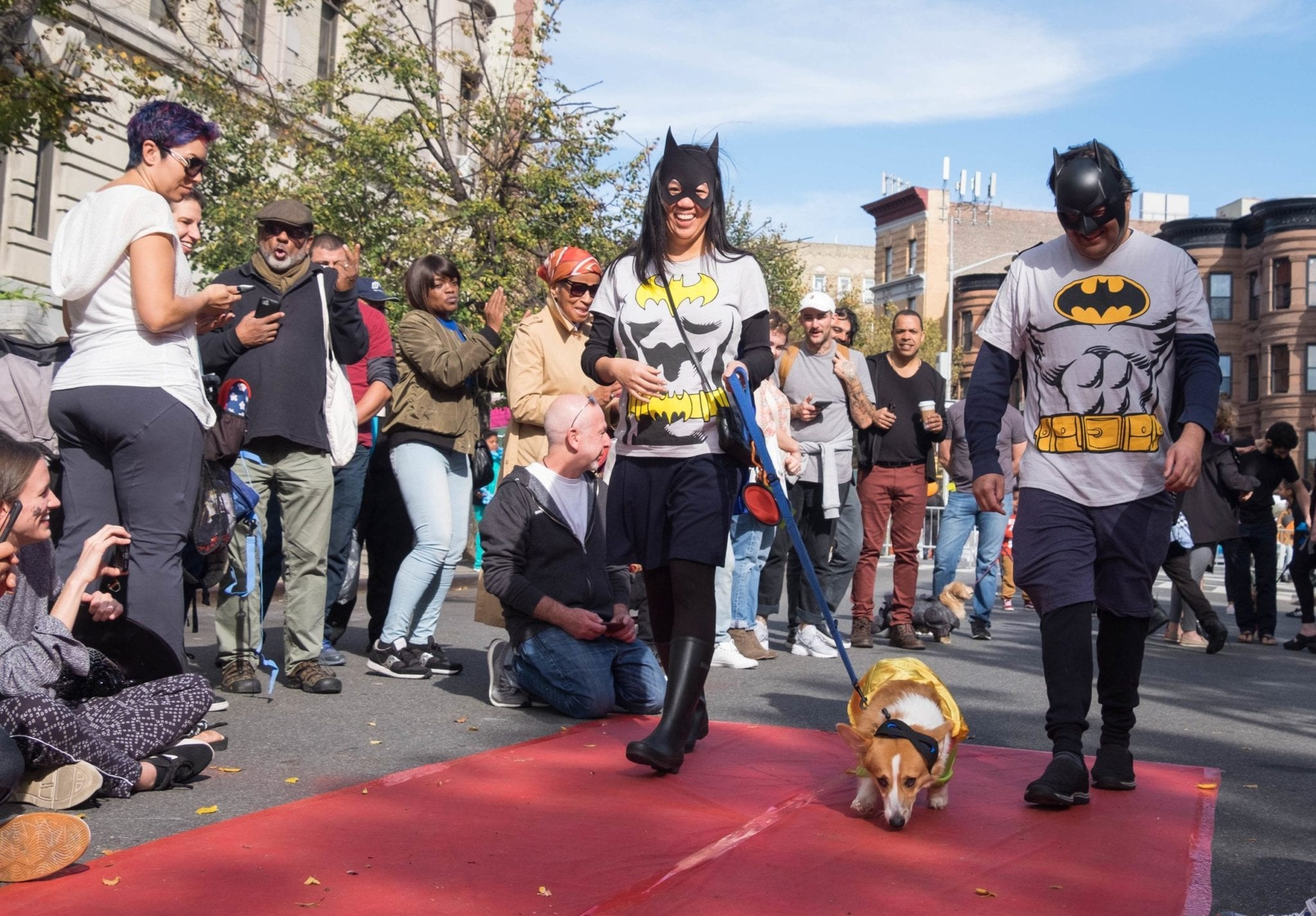 51f100190 The Best Halloween Dogs in Hamilton Heights, Harlem | Adventurous ...