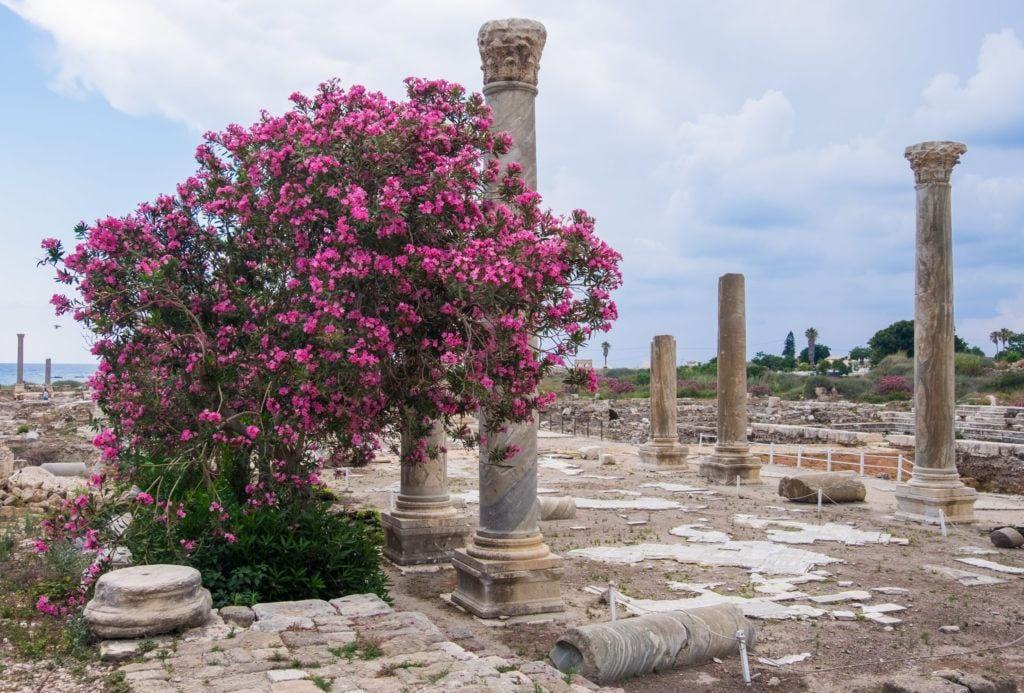 Columnas romanas pegadas hacia arriba en un área de piedra.  Frente a una de las columnas hay un arbusto de flores de color rosa brillante.  Todo bajo un cielo nublado.