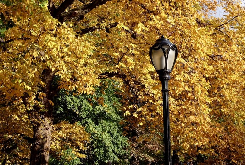 Yellow Leaves behind a lamppost in Central Park, NYC.