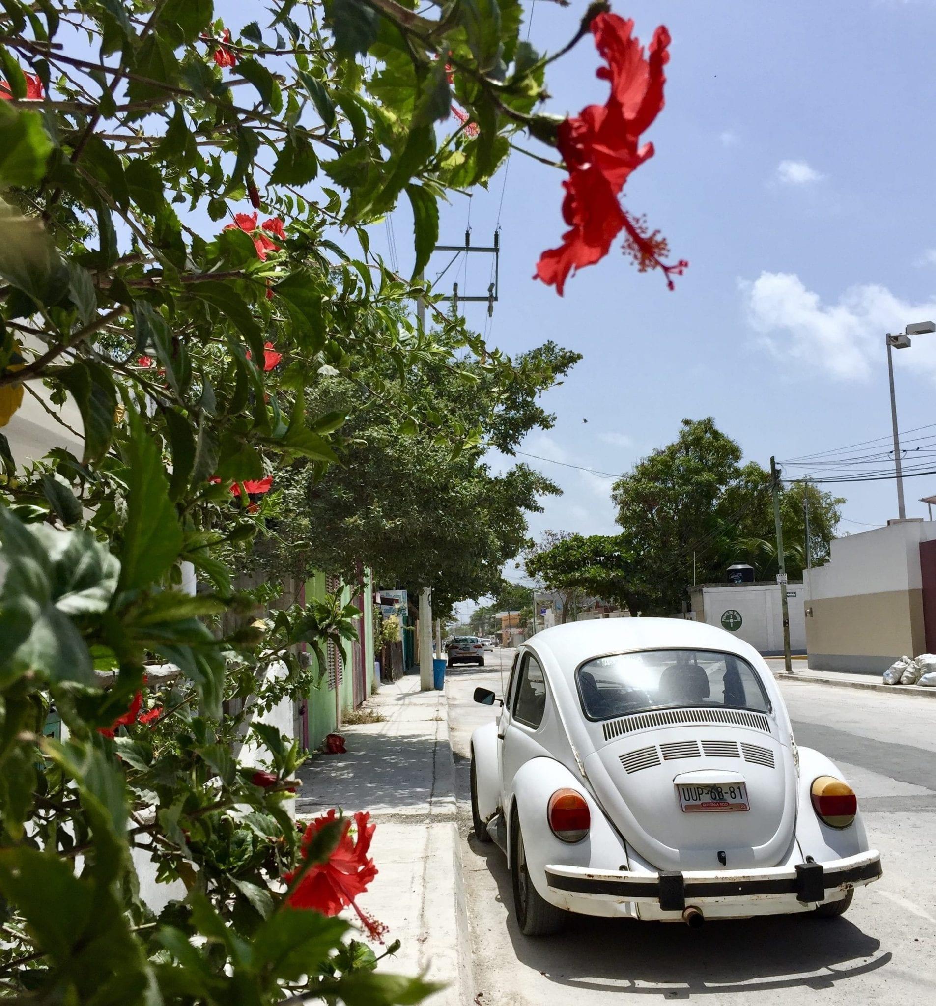IMG_9621 ▷ Viaje solo en México - ¿Es seguro?