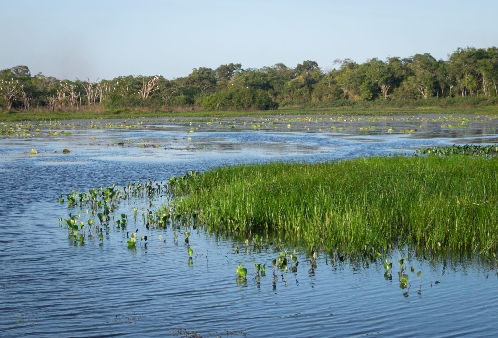 DSCF7448 ▷ ¿Qué es realmente como viajar a Guyana?
