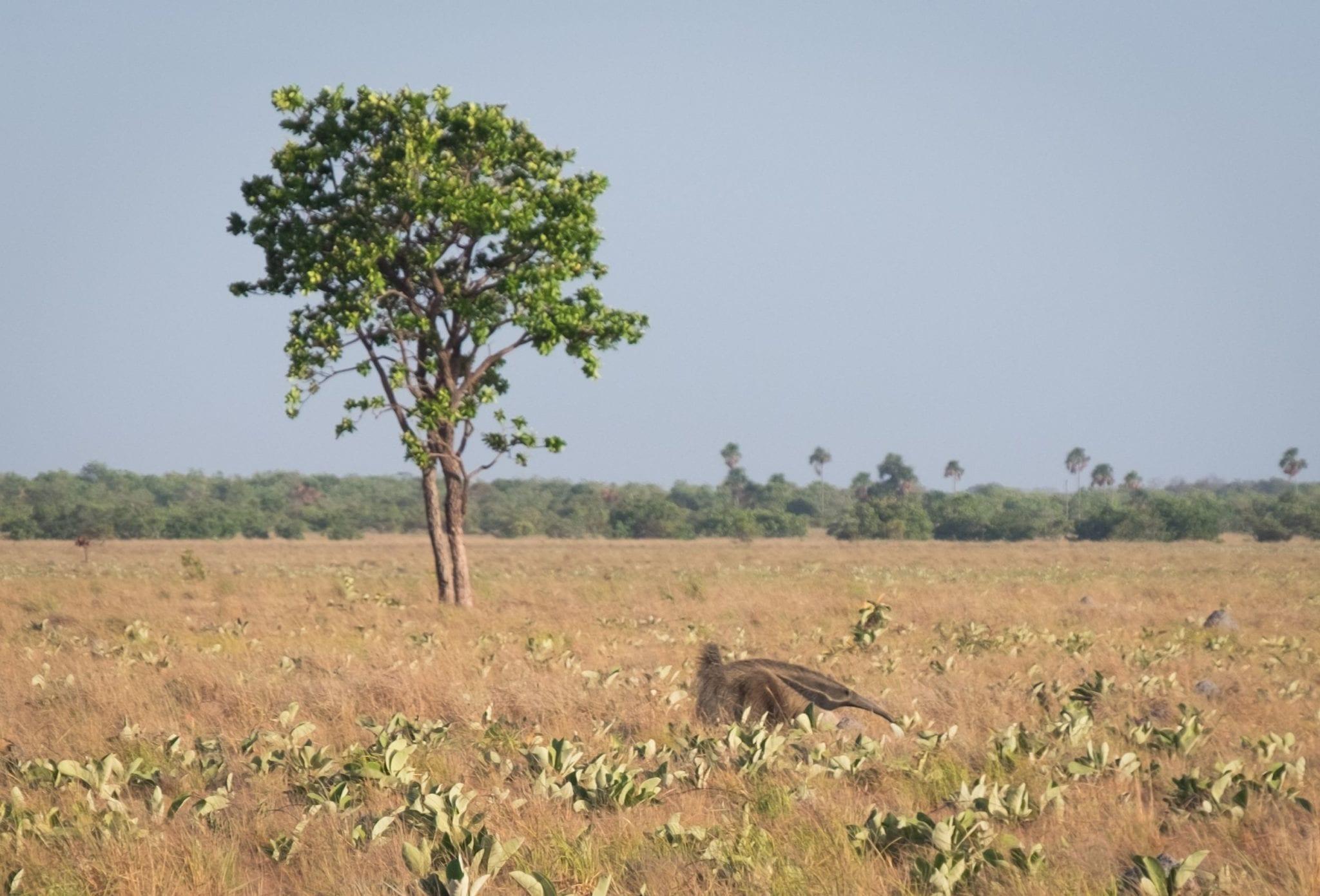 DSCF7526 ▷ ¿Qué es realmente como viajar a Guyana?