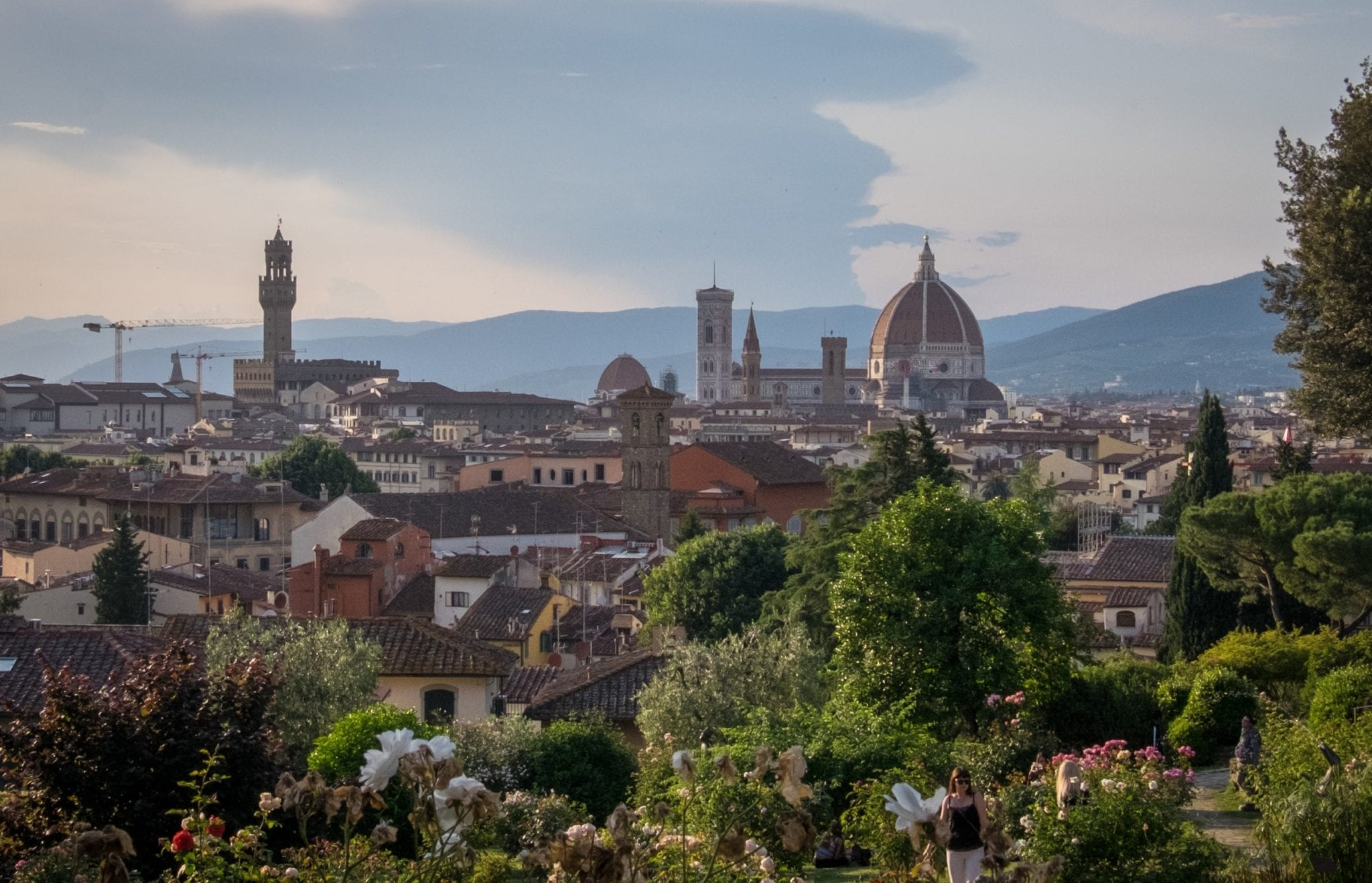 At dusk, Florence's Duomo and Palazzo Vecchio rise underneath a deepening blue sky and darker blue cloud. In the foreground are rose bushes from the rose garden.