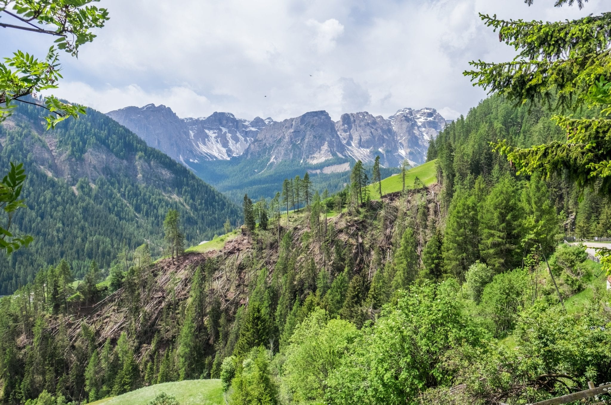 A view of the Dolomites in the background with a hill covered with dead evergreen trees lying on the ground.