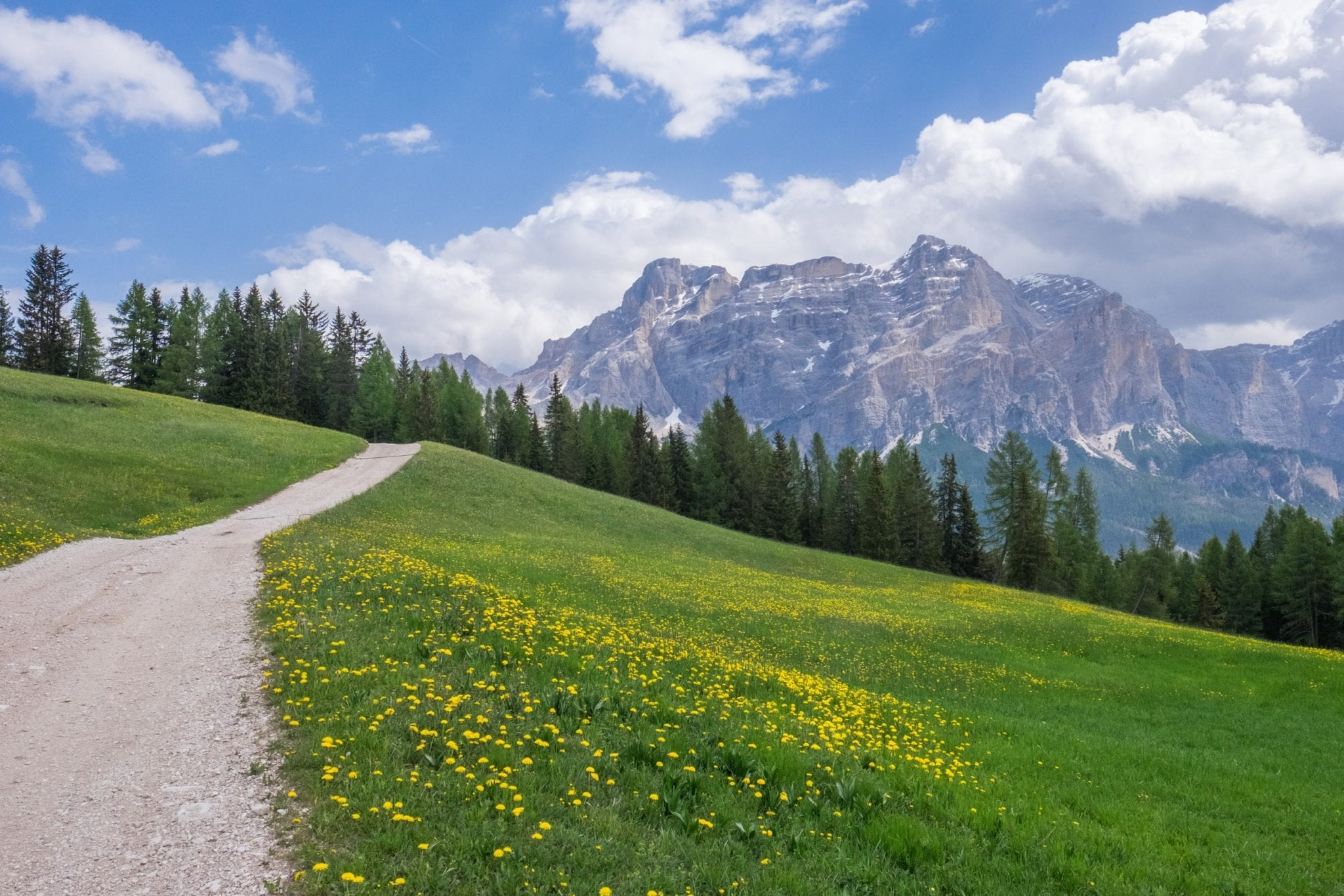 A view of a path on the left leading through green grass and yellow dandelions to the purple Dolomites set against a blue and white sky.