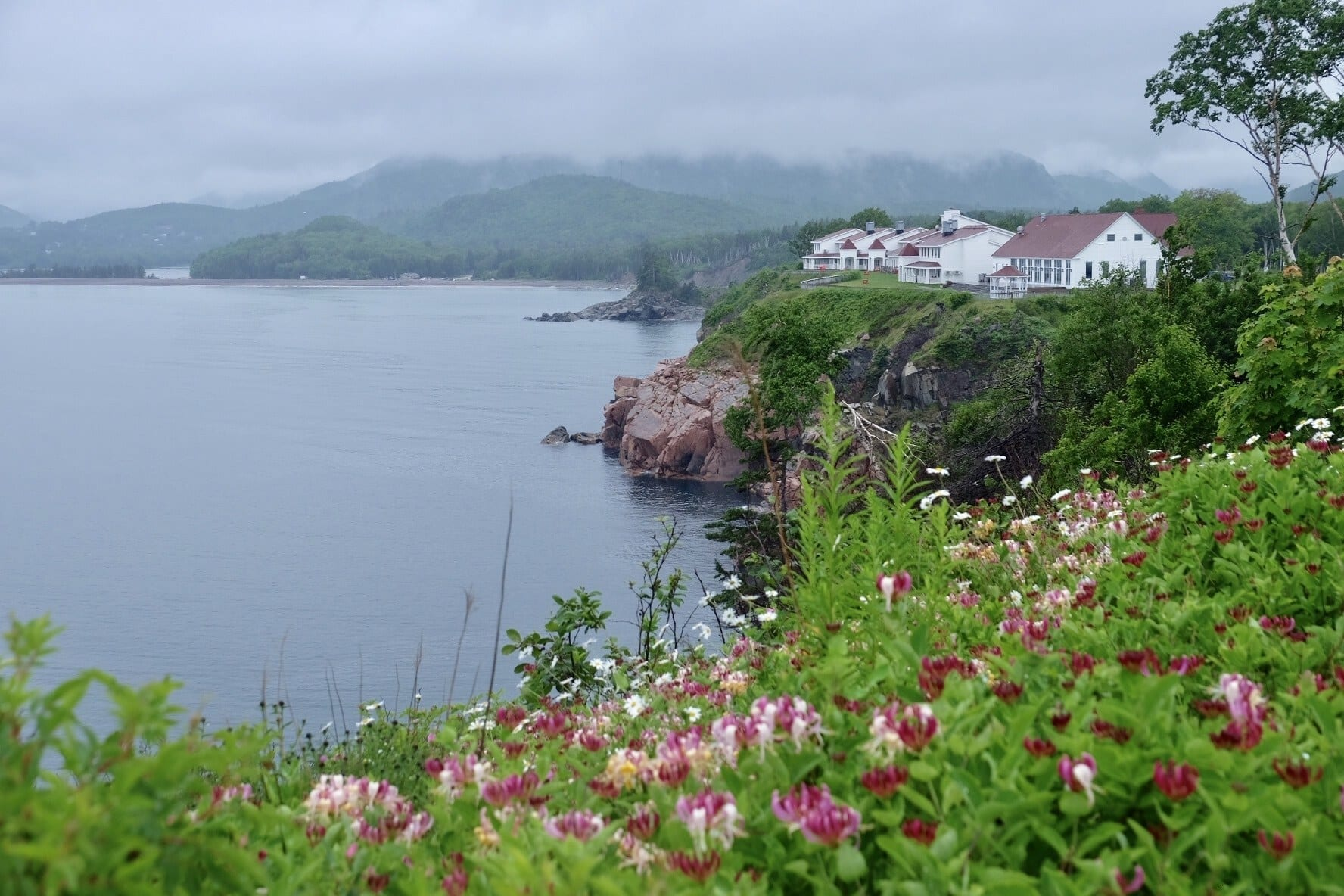 White cottages sit atop a gray cliff; in the foreground are flowers. A gray day in Nova Scotia.
