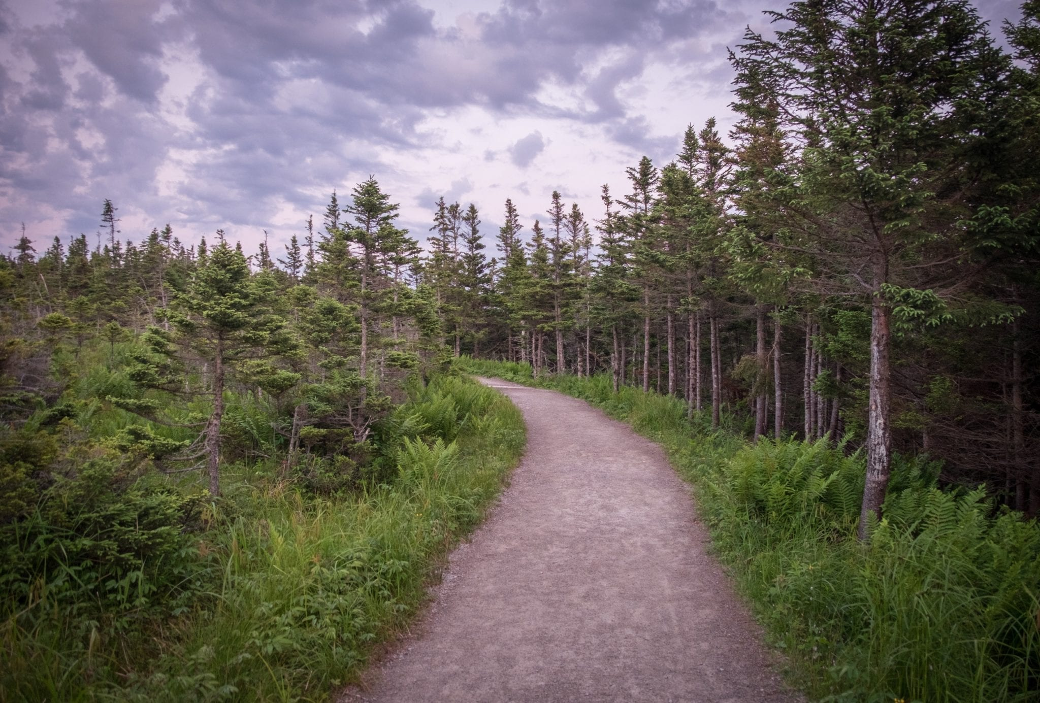 A path through the woods underneath a cloudy purple sky at Cape Breton Highlands National Park.