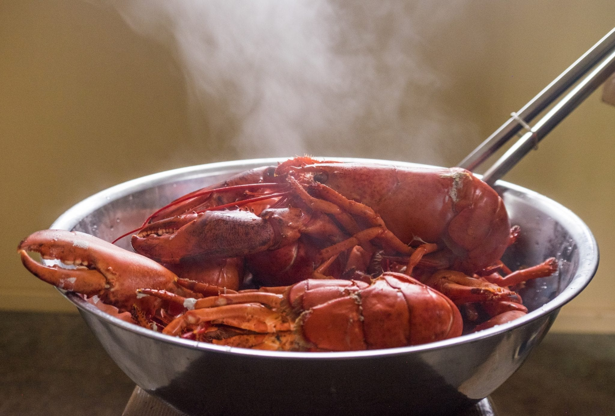 A pot full of bright red lobsters, steam rising up.