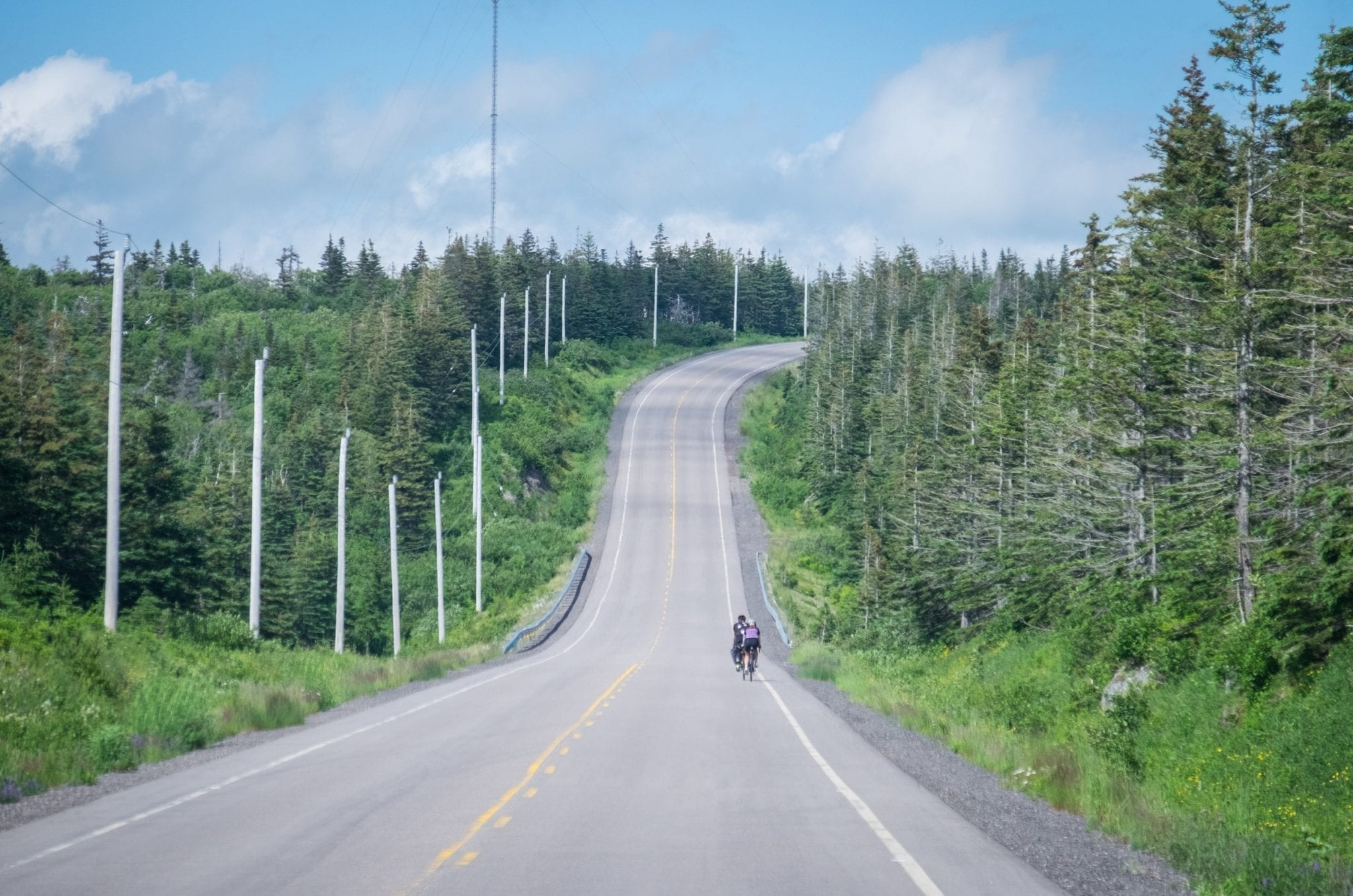 A road leading straight ahead, surrounded by pine trees. Two cyclists are riding along the road.